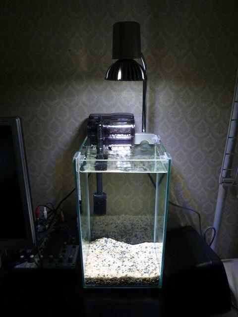 LEDライトとハイタイプ水槽