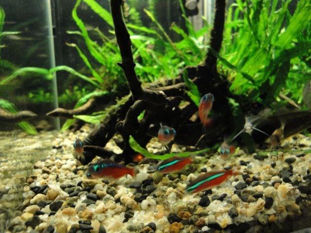 小型の水槽の魚