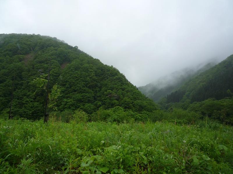 湿度の高い風景
