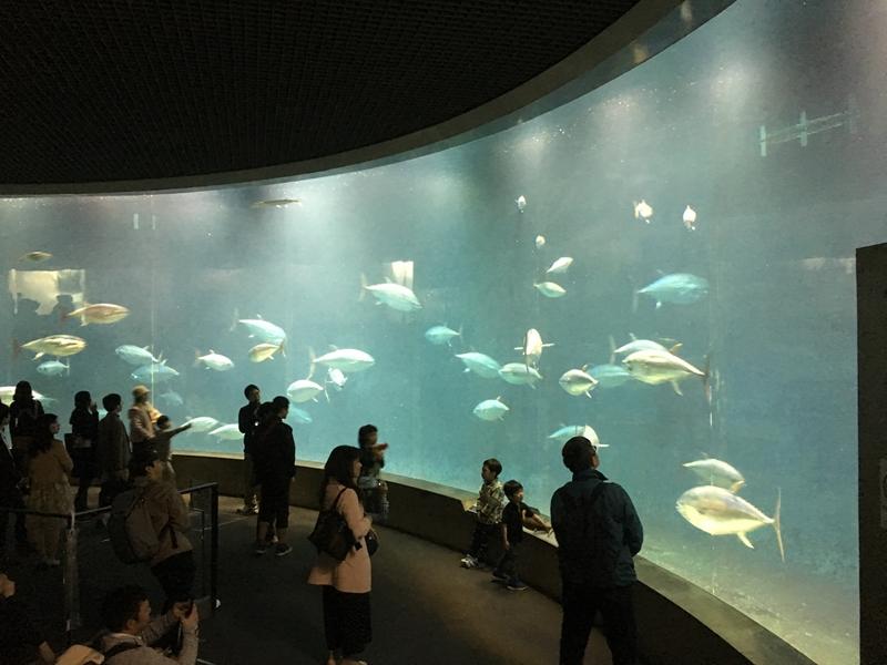 葛西臨海公園マグロ大型水槽