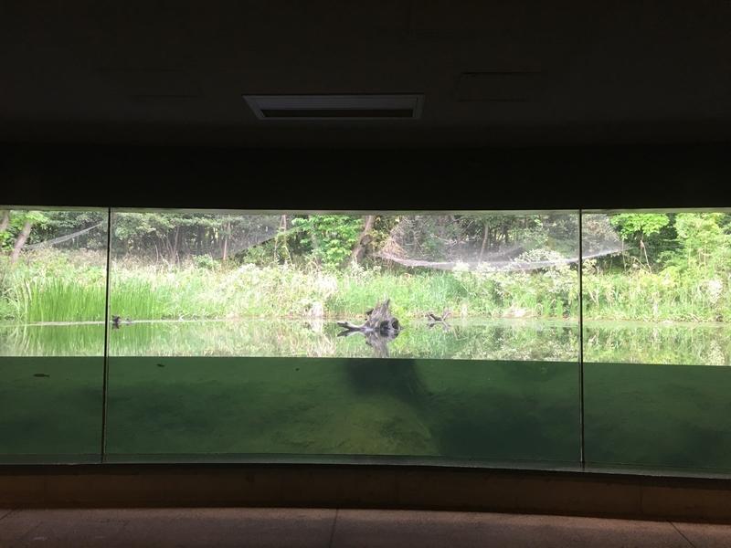 葛西臨海公園淡水生物館大型水槽