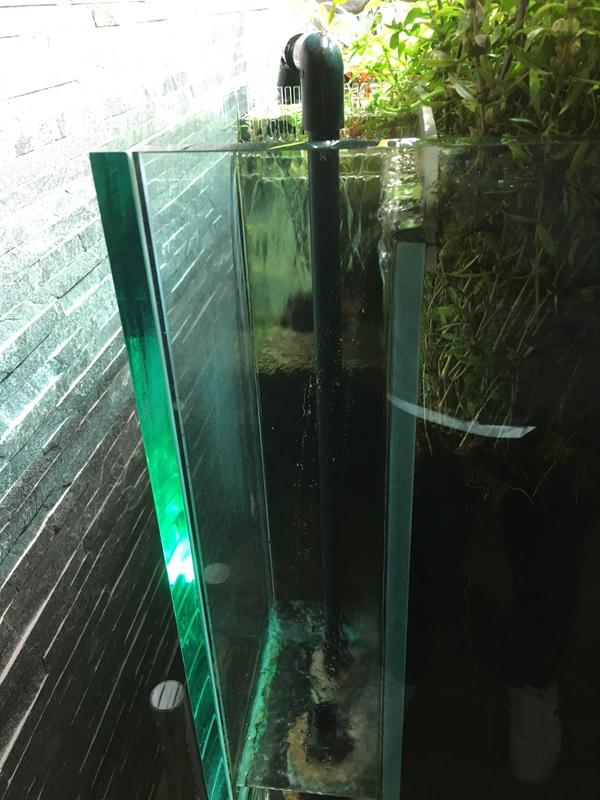 すみだ水族館オーバーフロー水草水槽