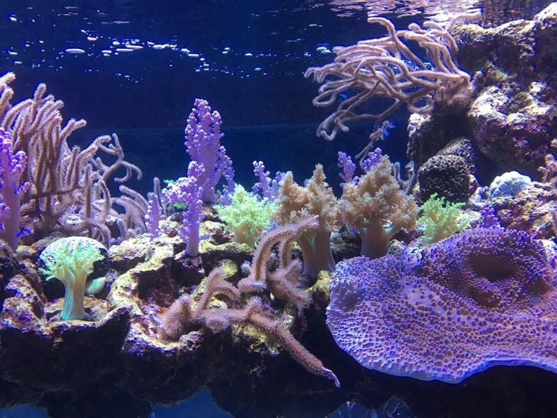 すみだ水族館サンゴ水槽