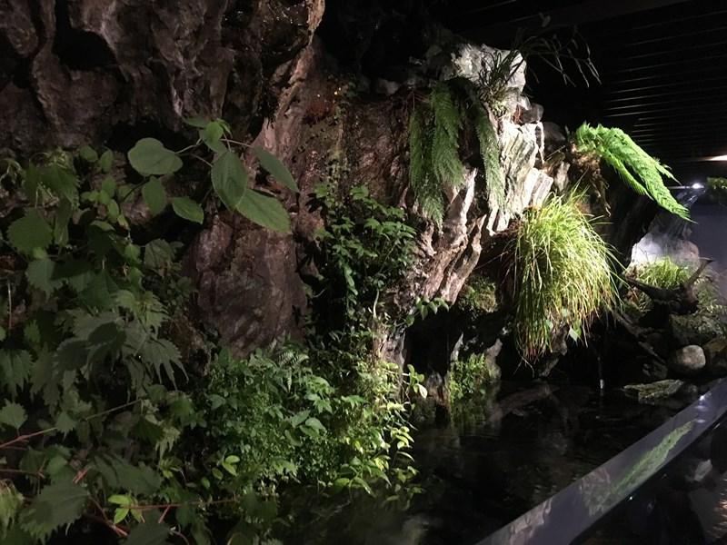 京都水族館京の川1