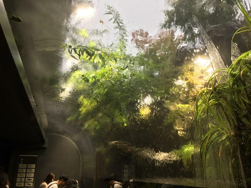 京都水族館京の川水槽ウォーターフォール