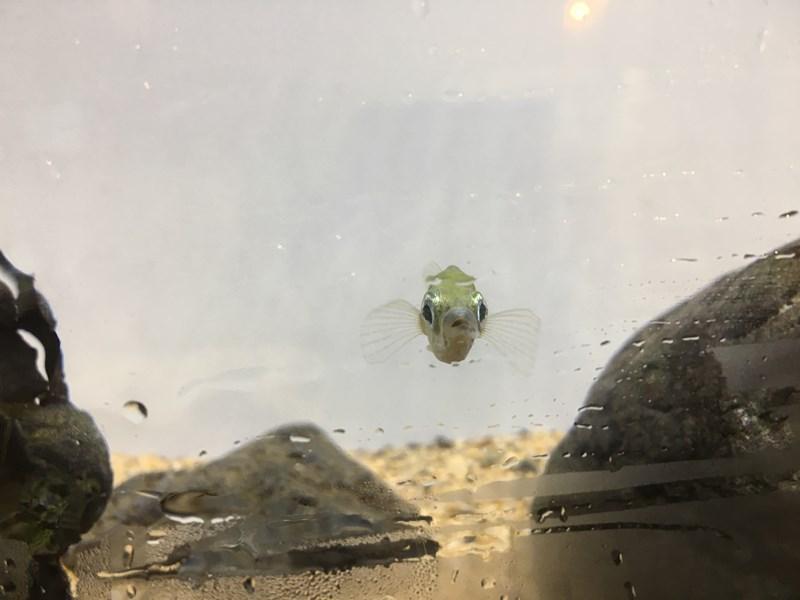 ニホンイトヨ京都水族館