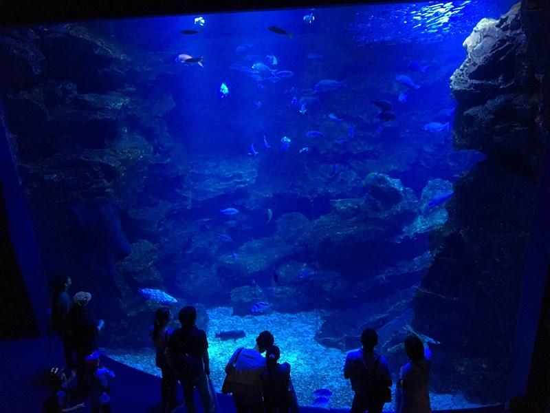京都水族館京の海ゾーン大水槽