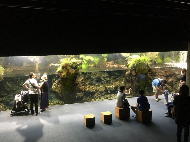 京都水族館京の川ゾーン