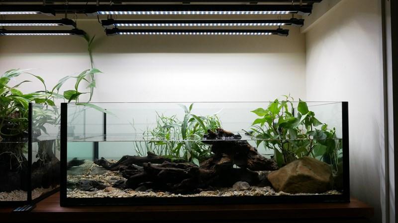 日本の淡水魚水槽セッティング完了