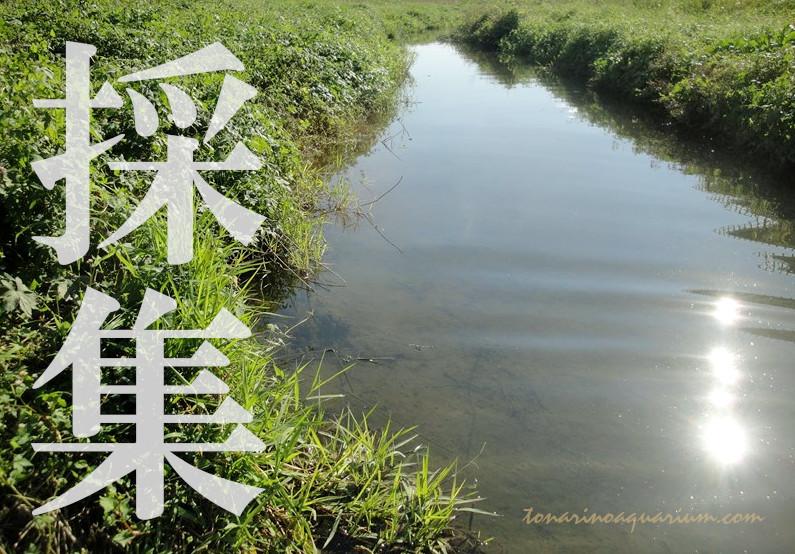 ドジョウのいる川